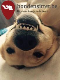 Thuisjob-vakantiejob-als-hondenoppas-hondenuitlaatdienst_3